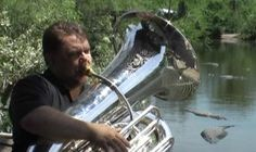 Pitch on a tuba sends gator into bellowing ecstasy.