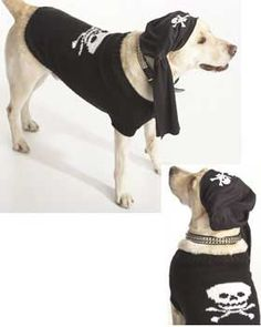 I-Matey Dog Coat