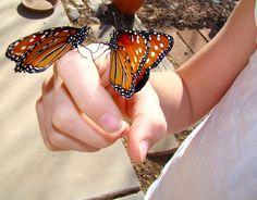 butterflies, via Flickr.
