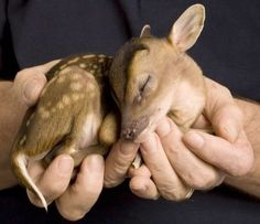 Brand new fawn...