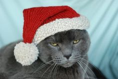 Free crochet pattern for cat's Santa hat