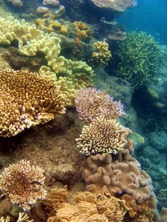 Coral Reef - Queensland, Australia