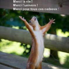 Thanks in a French Squirrel way :)