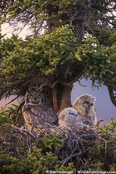 Silent....Perched owl family