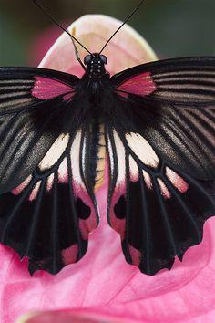 Butterfly photograph by Richard Verdegaal Fotografie