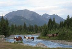 fording the creek - Montana working ranch for vacation