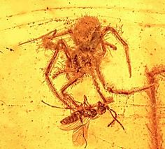 Unique ancient spider attack preserved in amber, about 100 million years old