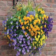 Petunias in Hanging Baskets doing this soon!