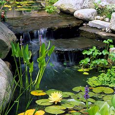 Someday - a water feature.