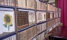 Historical Room of the Library of the University of Pisa, Italy