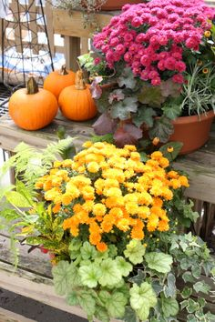 When deciding what to plant in containers, I think it's fun to add colorful elements like small pumpkins and gourds. In addition to mums, I like the purple punch of color with kale and cabbage too.