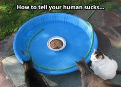 funny pictures, cat food, funny cats, funni, white cats, bath, kitty humor, funny photos, fat cats