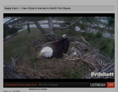 Eaglet hatches for North Fort Myers bald eagle cam stars Ozzie and Harriet