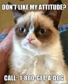 Don't like my attitude?  - Grumpy Cat
