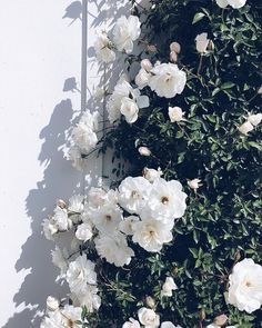Top 20 Pins of the Month on apartment 34 #flowers