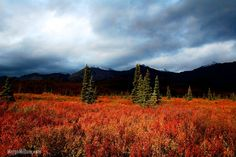 August in Denali National Park, from @Margo Cox Millure and travelbelles.com