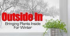 Bringing Plants Inside for Winter
