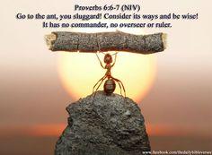Proverbs 6:6.7