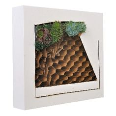 """Ivan Stojakovic Green Point S2, 12"""" x 10"""" x 3"""", mixed media, live succulent plants and deconstructed composite panel, 2014"""