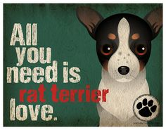 Rat Terrier Art Print by DogsIncorporated - super SUPER cute custom dog prints and a portion of every sale goes to dog rescue efforts worldwide anim, dogs, boxer, pet, doggi, art prints, poster, terrier, puppi