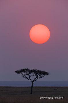 Africa - Masai Mara, Kenia