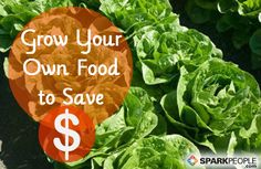Does growing your own food really save you money? We calculated the costs of growing your own food here... | via @SparkPeople #gardening