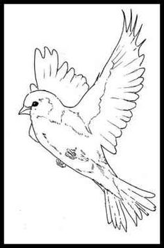Beautiful Birds Coloring Books