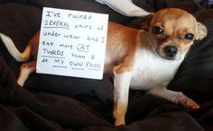 Dog Shaming:)