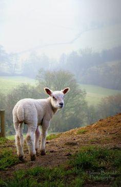 Where's my shepherd?