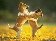 Stop wrestling me, it's TICKling me... : )