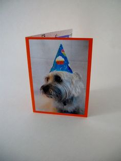 Cairn Terrier Birthday Card Dog Photo Birthday Card by Lillyzcardz, $4.00