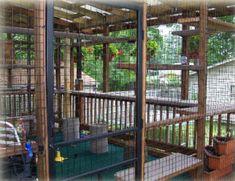 House Built For Cats   Cat Enclosures - Outdoor Cat Runs - Many Cat Enclosure Pictures