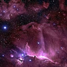 One of the most identifiable nebulae in the sky, the Horsehead Nebula in Orion.