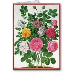 Vintage Blooming Flowers, Spring Garden Roses Greeting Cards