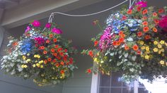 I made these beautiful hanging baskets with instructions these instructions for making the beautiful hanging baskets that are in Victoria, British Columbia.  http://www.victoria.ca/assets/Community/Documents/Hanging%20Baskets%20Brochure.pdf