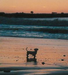 Dachshund on the Beach in Monterey, California