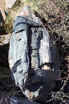 Fossilised wood, Karoo National Park by flowcomm, via Flickr