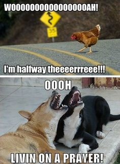 This is why the chicken crossed the road.