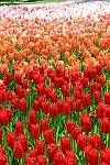 Tulip Museum