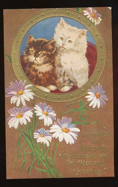 Brown & White Cats Kittens in Cameo with Daisy Flowers~Greeting~Postcard-ccc858