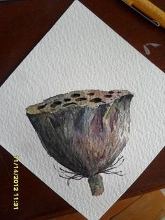 一棵羊角榕  的插画 莲蓬