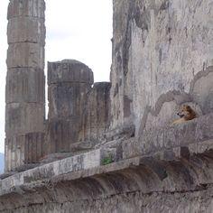 Pompeiian doggie