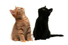 orange kitten and black kitten looking up