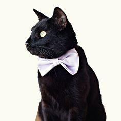 Cat Bow Tie. Mr. Boo Radley really needs one of these.