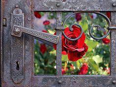 view through a metal gate...into the rose garden....