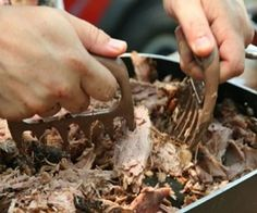Bear Claw Meat Forks