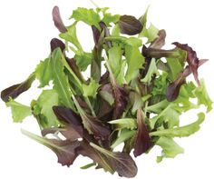 http://www.westcoastseeds.com/productdetail/Vegetable-Seeds/Lettuce/Fast-and-Furious-Babyleaf-Blend/#sthash.xhON6DJB.dpbs The best baby lettuce blend you'll ever eat. Certified Organic leaf lettuce ready to harvest in 35 days.