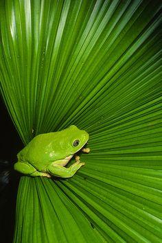 Fan of #amphibians? Us too. :)