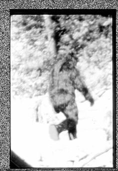 what: tour Cascade Mountains in hope of seeing Bigfoot http://www.travelchannel.com/interests/haunted/articles/finding-bigfoot