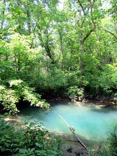 The Blue Hole when it's actually blue, at McConnell Springs Park in Lexington, KY. It's the founding site of Lexington, and has walkways through wetlands, beside ancient burr oaks, and along the stream leading from this natural spring in the midst of the park. Wonderful!